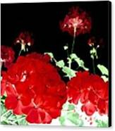 Red Geraniums Canvas Print by Will Borden