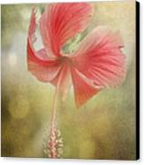 Red Hibiscus Canvas Print by David and Carol Kelly