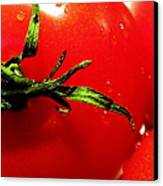 Red Hot Tomato Canvas Print by Karen Wiles