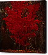 Red Maple Tree Too Canvas Print
