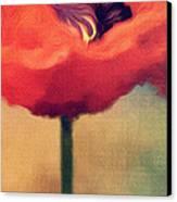 Red Poppy Canvas Print by Rosie Nixon