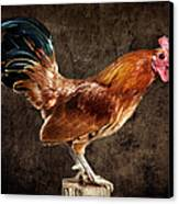 Red Rooster On Fence Post Canvas Print
