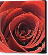 Red Rose Canvas Print by Lars Ruecker