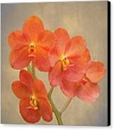 Red Scarlet Orchid On Grunge Canvas Print by Rudy Umans