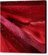 Red Ti The Queen Of Tropical Foliage Canvas Print