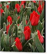 Red Tulips II Canvas Print by Maeve O Connell