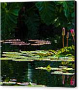 Red Water Lily In A Tropical Pond Canvas Print by Julio Solar