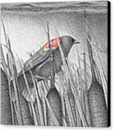 Red-winged Blackbird Canvas Print