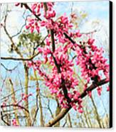 Redbud Buds Canvas Print