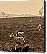 Redeemed By The Lamb Canvas Print