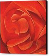 Redrose14-1 Canvas Print by William Killen