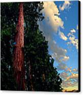 Redwood Cabin Canvas Print by Ric Soulen