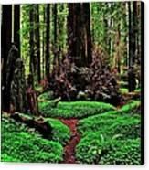 Redwoods Wonderland Canvas Print by Benjamin Yeager
