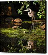 Reflective Heron Canvas Print by Sylvia J Zarco