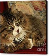 Rescue Cat Living In The Lap Of Luxury Canvas Print