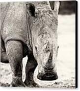 Rhino After The Rain Canvas Print by Mike Gaudaur