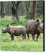 Rhino Family Canvas Print