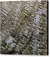 Ripples In The Swamp Canvas Print by Carol Groenen