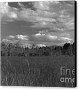 River Of Grass Canvas Print by Andres LaBrada