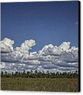 River Of Grass Canvas Print by Anne Rodkin