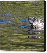 River Otter Canvas Print by Julie Cameron
