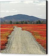 Road Through Autumn Blueberry Maine Canvas Print by Scott Leslie