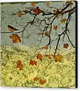 Robin In Maple Canvas Print by Carolyn Doe