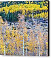 Rocky Mountain Autumn Contrast Canvas Print by James BO  Insogna