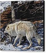 Rocky Mountain Encounter Canvas Print by Skye Ryan-Evans