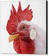 Rooster Canvas Print by Thomas Kitchin & Victoria Hurst