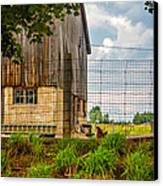 Rooster Turf Canvas Print
