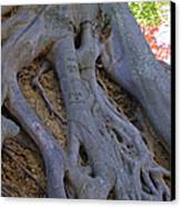 Roots Canvas Print by Suzanne Gaff