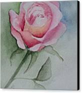 Rose 1 Canvas Print by Nancy Edwards