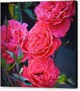 Rose 138 Canvas Print