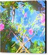 Rose 182 Canvas Print by Pamela Cooper