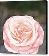 Rose 195 Canvas Print by Pamela Cooper