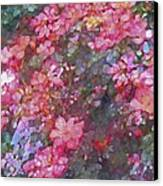 Rose 199 Canvas Print by Pamela Cooper