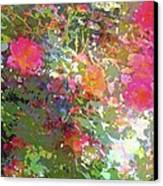 Rose 207 Canvas Print by Pamela Cooper