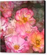 Rose 210 Canvas Print by Pamela Cooper