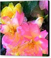 Rose 211 Canvas Print