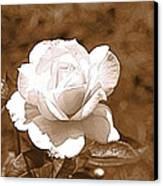 Rose In Sepia Canvas Print by Victoria Sheldon