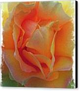 Rose Taken At Sunset  Canvas Print by Daniele Smith