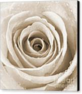 Rose With Water Droplets - Sepia Canvas Print by Natalie Kinnear