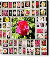 Roses Collage 2 - Painted Canvas Print by Stefano Senise