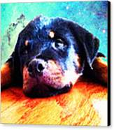 Rottie Puppy By Sharon Cummings Canvas Print by Sharon Cummings