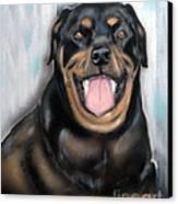 Rottweiler Canvas Print by Chris Dreher