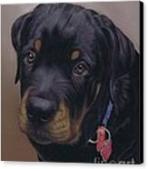 Rottweiler Dog Canvas Print