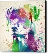 Rottweiler Splash Canvas Print by Aged Pixel