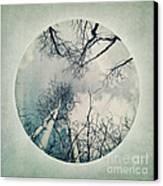 round treetops II Canvas Print by Priska Wettstein