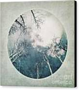 round treetops III Canvas Print by Priska Wettstein